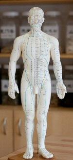Acupunctutre model